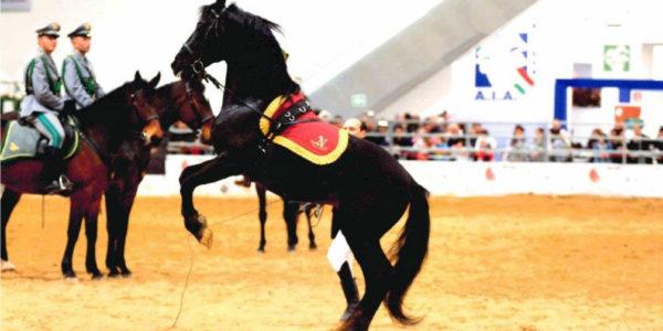 """Fiera di """"RomaCavalli"""" 2012 – presentazione cavallo napoletano"""